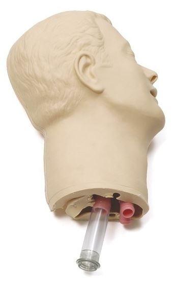 Kopfhaut mit Luftwegen+Zähnen